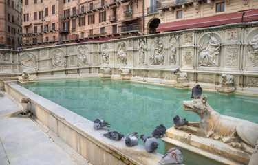 Gaia fountain -Siena