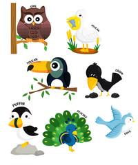 bird vector set