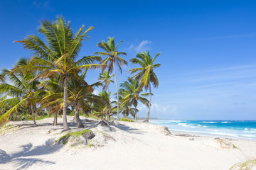 Palm trees on the tropical beach, Bavaro, Punta Cana, Dominican