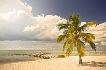 Summer at a tropical paradise in Florida Key West