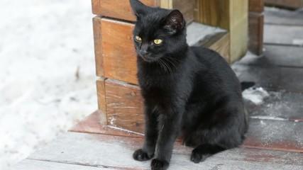 Black cat kitten with yellow eyes outdoor
