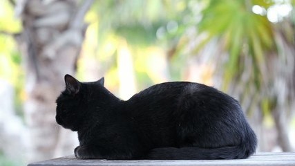 Black cat with yellow eyes outdoor
