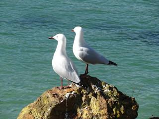 Emupoint Albany - Great Ocean Road - Western Australia