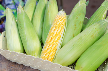 Fresh corn in the basket