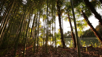 Thickets of Palm Trees and Bamboo in the Sun