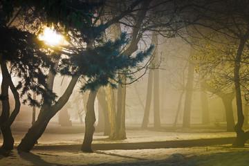 Foggy night in park