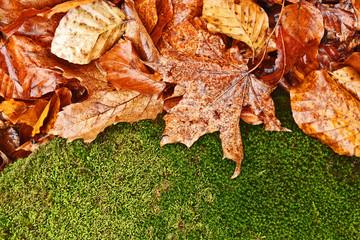 Wet foliage background