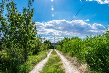 Camino de huerta