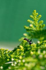 Hormiga en el árbol