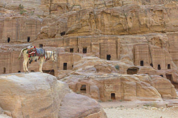 Donkey by the Ancient houses in Petra