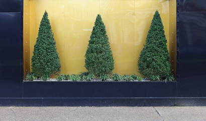 Pine tree bush