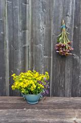 Echinacea purpurea  coneflower flower bunch and St. Johns wort