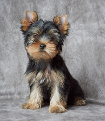 Pet on textile backdrop