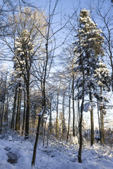 sunny winter day in forest