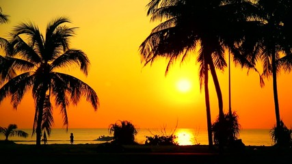 silhouettes of palm trees on a background of the sea, sunset