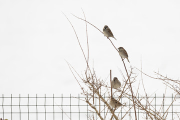 Oiseau moineaux sur une branche