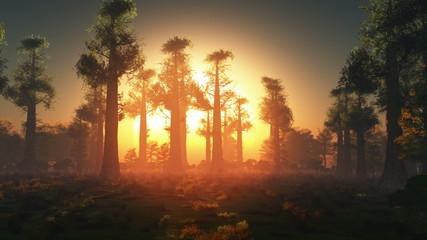 rising sun light in forest