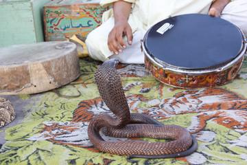 Cobra e incantatore di serpenti