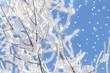 canvas print picture - Schneebedeckte Zweige
