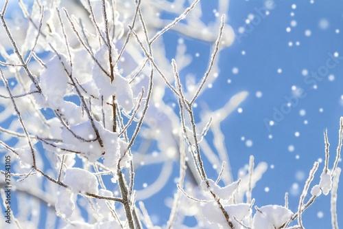 canvas print picture Schneebedeckte Zweige