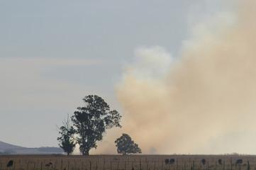 Burning of Grasslands