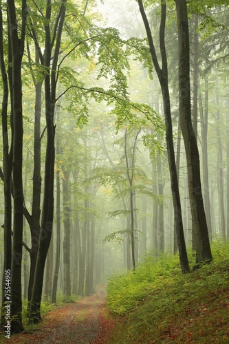 Fotobehang Bos in mist Path through the autumnal forest in the fog