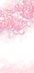 Romantic background with pink chrysanthemum