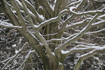 Äst eines Baumes mit Schnee