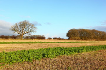 Winter fields in a scenic Yorkshire wolds landscape in December