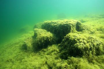 Mit Fadenalgen überwachsener Seeboden