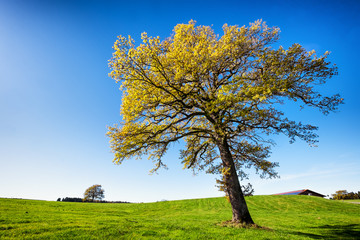 tree at a meadow
