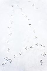 Spuren von Vogel im Schnee