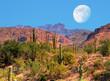 Desert Moon - 75554350