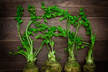 parsley with green leaves on a wooden background