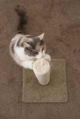 Cat scratching overhead - Portrait