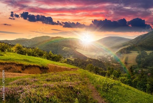 Staande foto Heuvel flowers on hillside meadow with forest at sunset