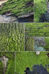 Textures of moss
