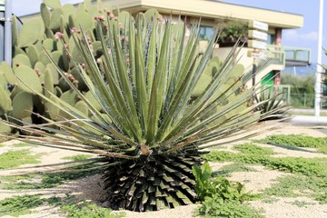 prickly cactus, exotic plants
