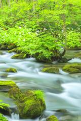 Summer of Oirase Strea, Aomori, Japan