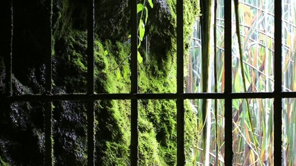 Waterfall and Nature Behind Iron Fence in Cave