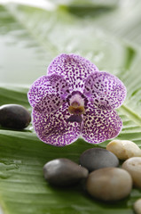 Set of purple orchid and stones on wet banana leaf