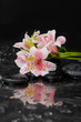 Wet Zen Spa Stones with lying down orchid