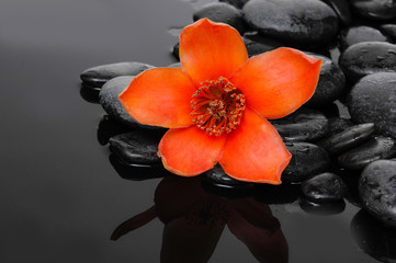 Macro of red  flower with therapy stones on wet background