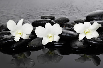 three white orchid on wet stones –wet background
