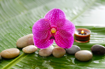 Set of pink orchid and stones, candle on wet banana leaf