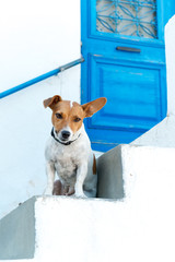 Friendly dog by the traditional door, Lefkes village, Paros
