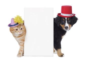 Hund und Katze mit Faschingshüten
