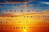 Fototapety birds on a background of sunrise