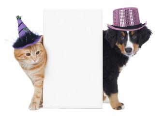 Hund und Katze mit Karnevalshütchen