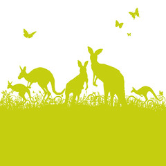 Springende Kängurus im Gras